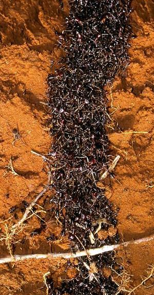 5 наиболее устрашающих насекомых в мире